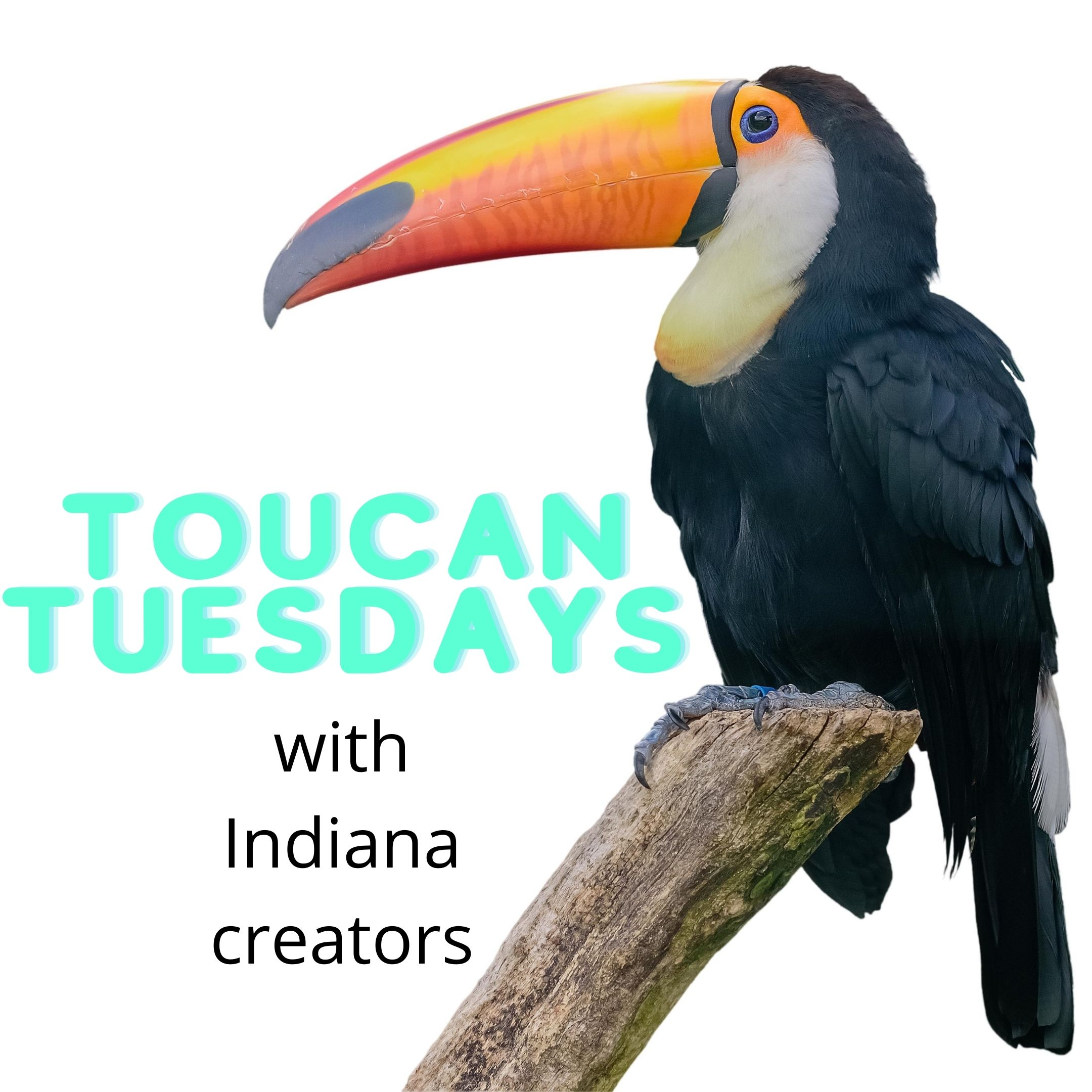 Presenting a series of interviews by Sammy the Toucan (a.k.a. Suzanne Walker at Indiana State Library) of SCBWI members who are authors or author-illustrators Listed in order of appearance in 2020 Skila Brown Peggy Reiff Miller B.A. Williamson Meg Demakas